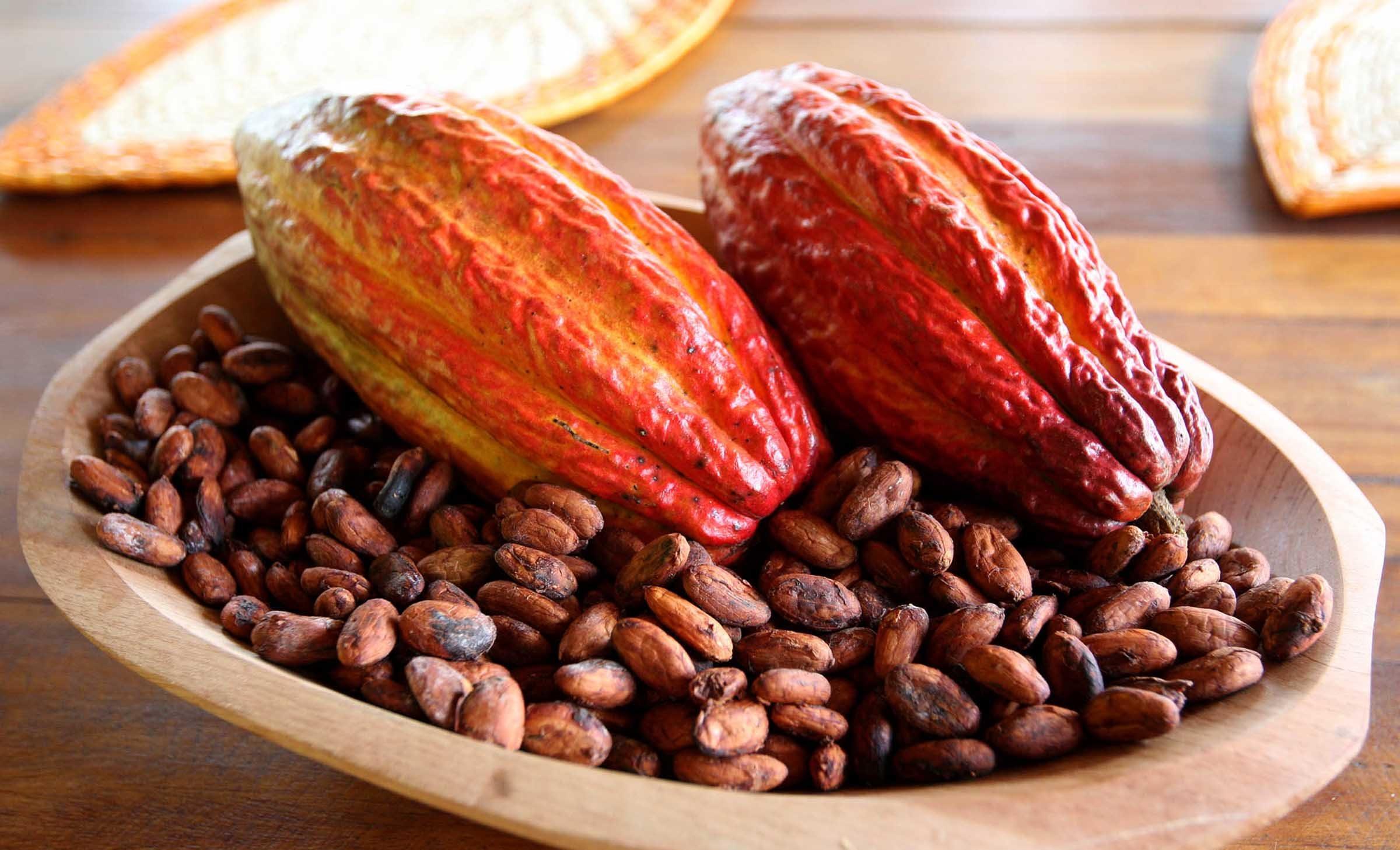 Organizadores do Salon Du Chocolat visitam fazenda modelo na produção de cacau no Recôncavo, a Fazenda Engenho D'Agua.  Fotos: Mateus Pereira/Secom